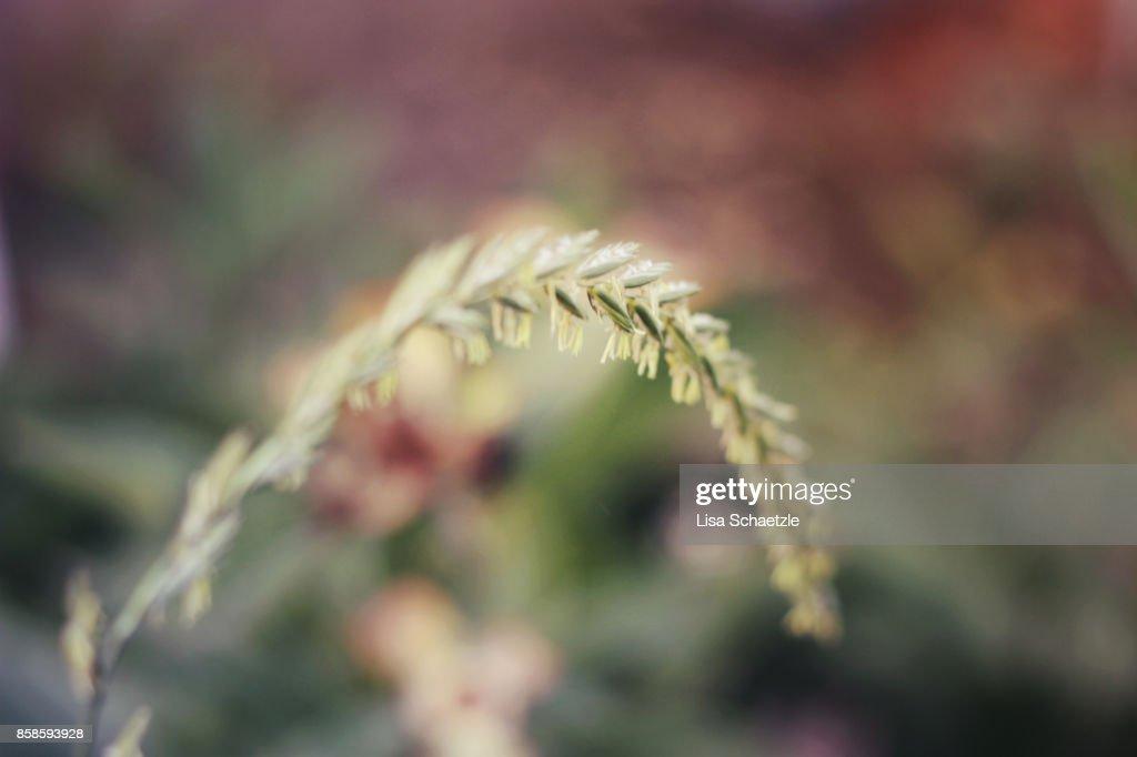 Close up of ornamental grasses : Stock-Foto