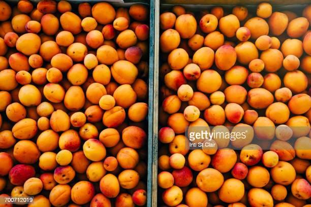 Close up of peaches in wheelbarrow