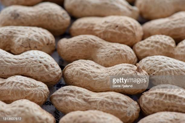 close up of peanuts in their shell - dorte fjalland fotografías e imágenes de stock