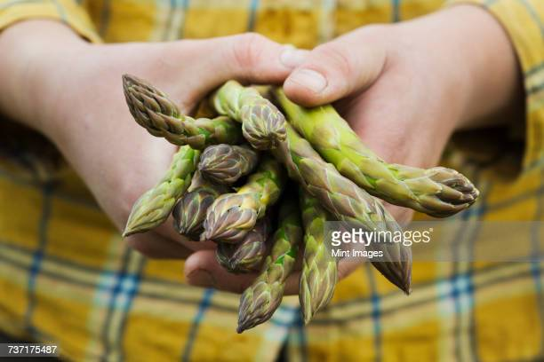Close up of person holding a bunch of green asparagus.