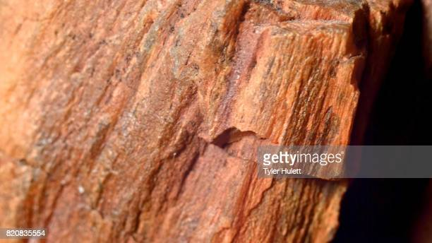 close up of petrified wood fossil fossilized rock from same oregon formations as john day fossil beds national monument 1 - petrified wood stock pictures, royalty-free photos & images