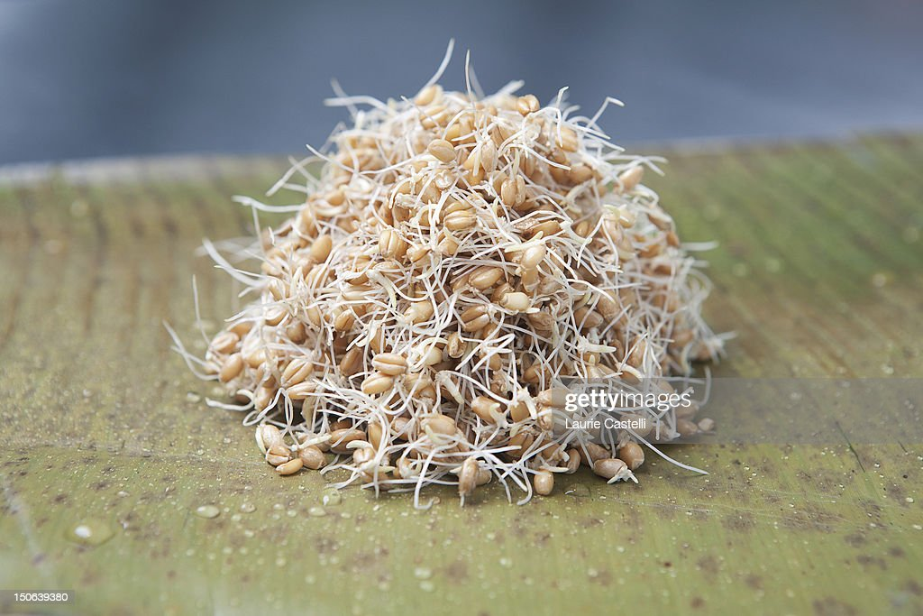 Close up of pile of sprouts : Stock Photo