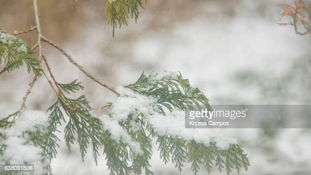 Close up of plant branch cover with snow