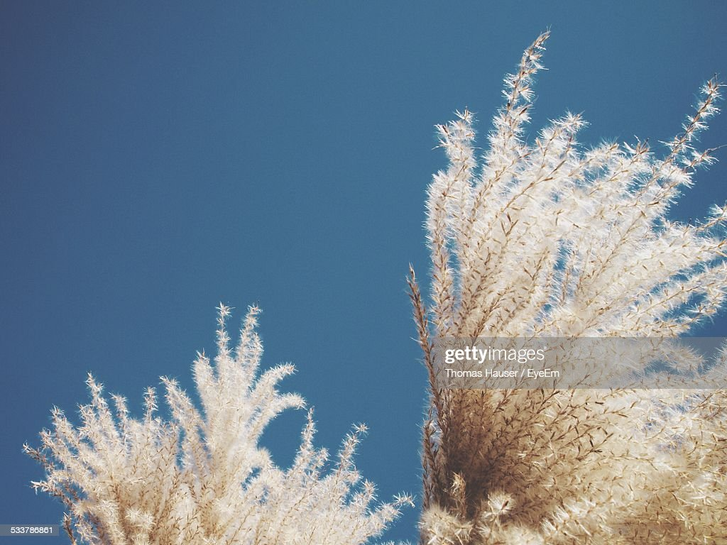 Close Up Of Plant : Foto stock