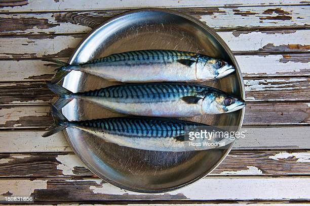 Close up of plate of mackerels