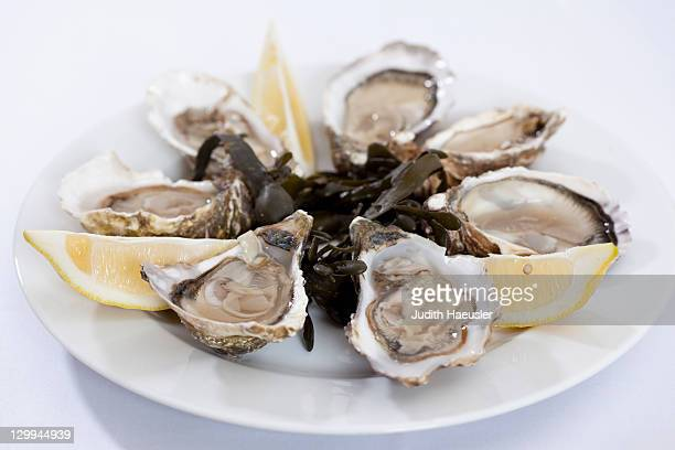 Close up of plate of oysters