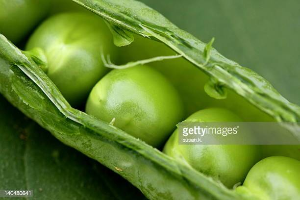 Close up of pod and green peas