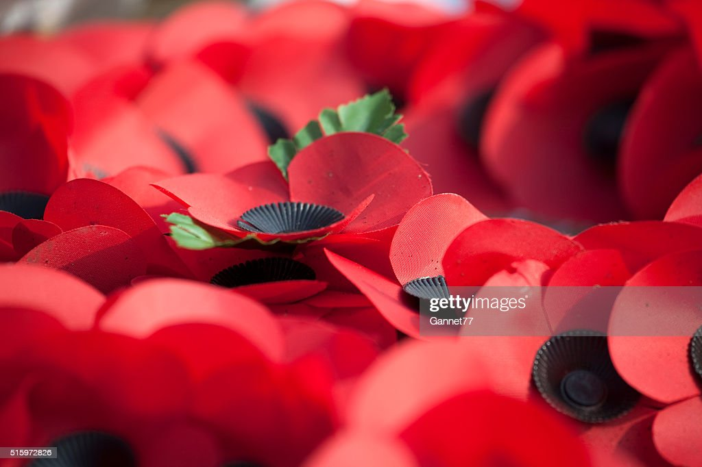 Close up of Poppies on Remembrance Wreaths : Stock Photo