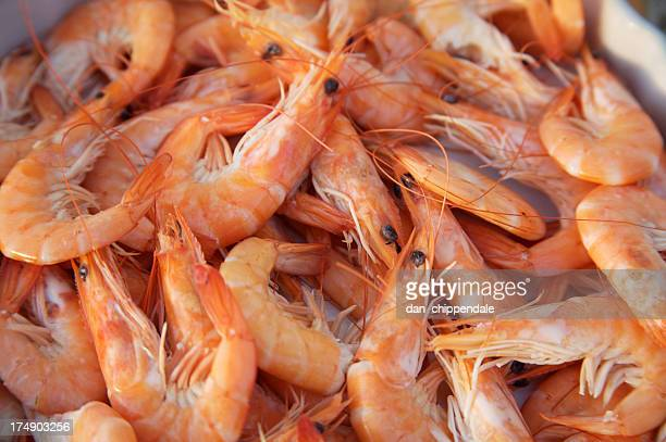 Close up of prawns