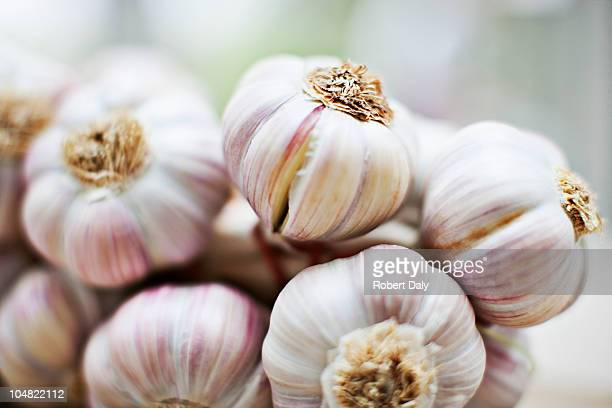 Close up of purple garlic