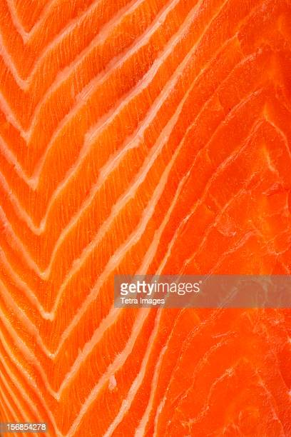 Close up of raw salmon meat, studio shot