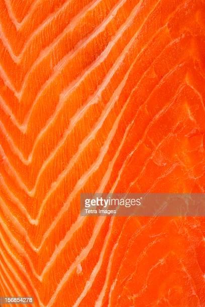 close up of raw salmon meat, studio shot - 鮭料理 ストックフォトと画像
