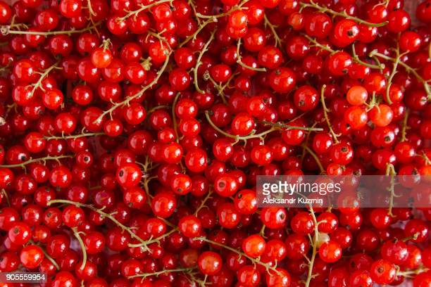 close up of red berries - johannisbeere stock-fotos und bilder