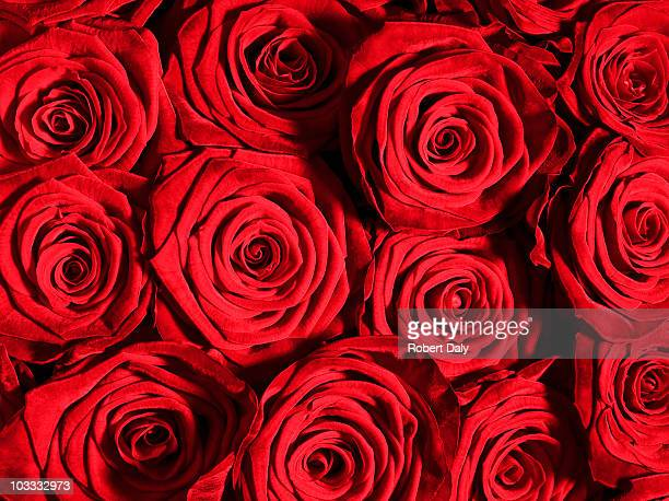 Clos'up of red roses