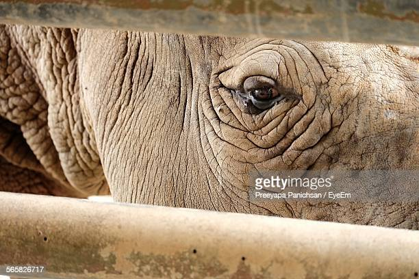 Close Up Of Rhino