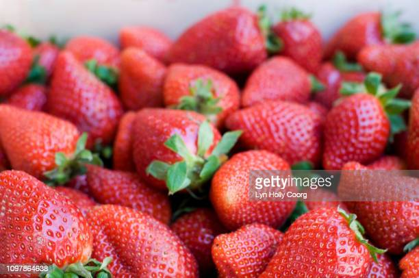 close up of ripe fresh red strawberries for sale - lyn holly coorg stock pictures, royalty-free photos & images