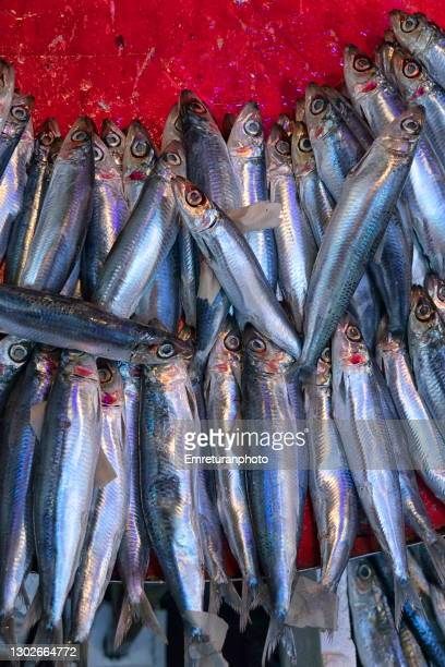 close up of sardines in fish market. - emreturanphoto stock pictures, royalty-free photos & images