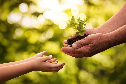 Close up of senior hands giving small plant to a child 953772938
