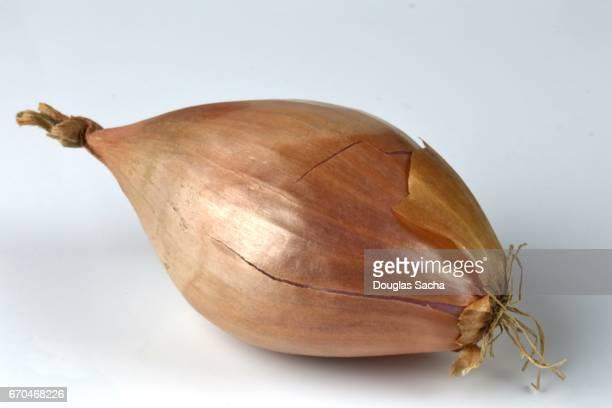 close up of shallot onions (allium cepa) - echalote fotografías e imágenes de stock