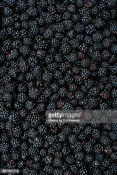close up of shiny, freshly picked blackberries - blackberry fruit stock pictures, royalty-free photos & images