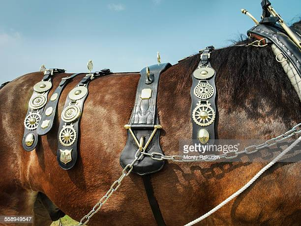 Close up of shire horse with brasses in English country show