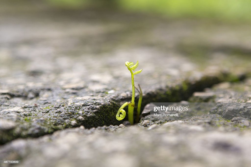 Close up of shoots growing in stone cracks : Stock Photo