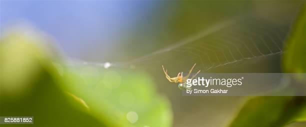 Close up of Spider Upside Down on Web