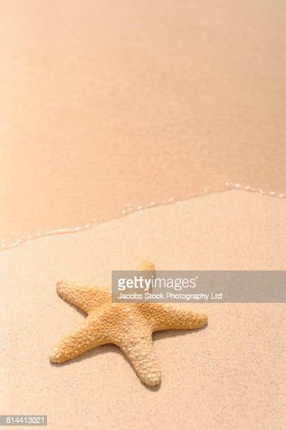 Close up of starfish on tropical beach