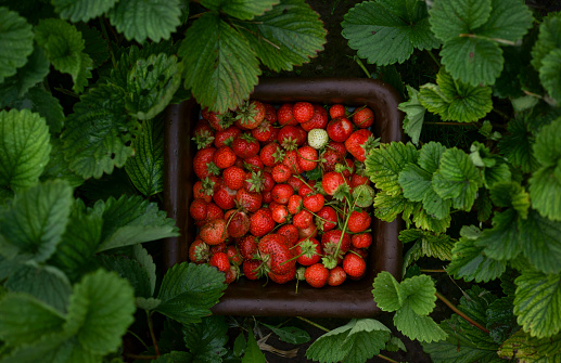 Close up of strawberries in basket - gettyimageskorea