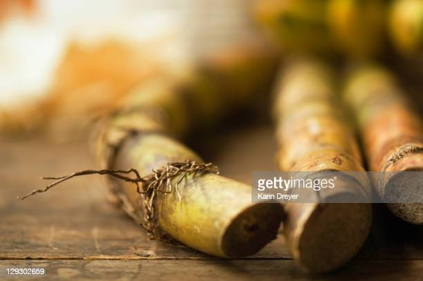 close up of sugar cane stick - sugar cane stock pictures, royalty-free photos & images
