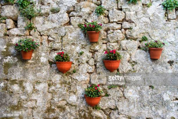 Close up of terracotta plant pots on a stone wall, with plants growing.
