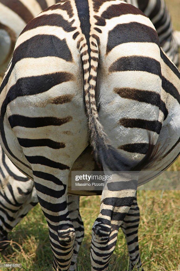 Close up of the back of a Zebra in Tanzania : Foto de stock