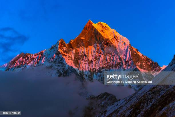 close up of the peak of machhapuchhre (fish tail) at sunset, nepal. - machapuchare stock photos and pictures
