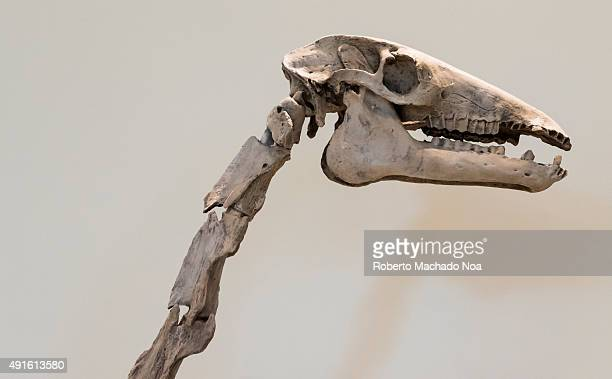 Close up of the skeleton of a dinosaur on display at the Royal Ontario Museum The Royal Ontario Museum is a museum of art world culture and natural...