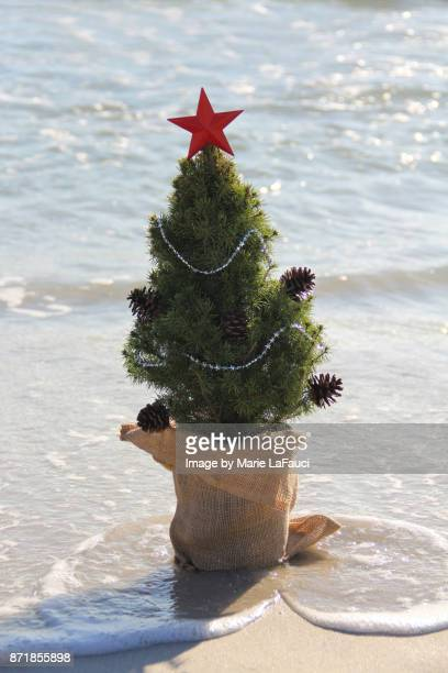 close up of tiny christmas tree in the water at the beach - marie lafauci stock pictures, royalty-free photos & images