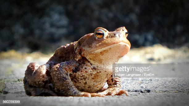 Close Up Of Toad