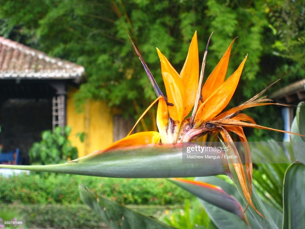 Close Up Of Tropical Flower : Foto stock