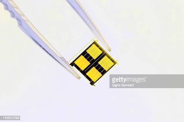 close up of tweezers holding microchip - computer chip stock pictures, royalty-free photos & images
