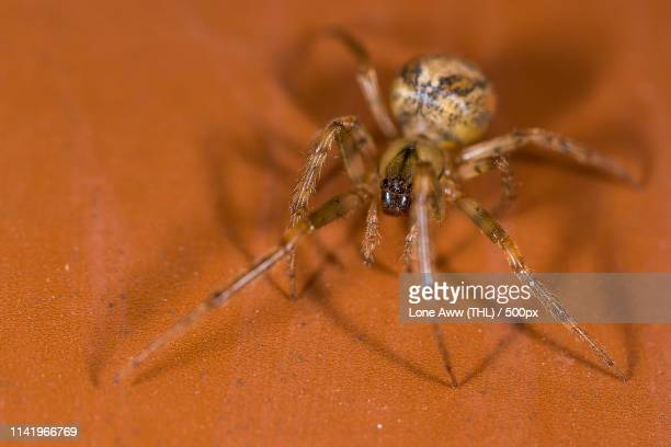 close up of ugly spider - ugly spiders stock photos and pictures