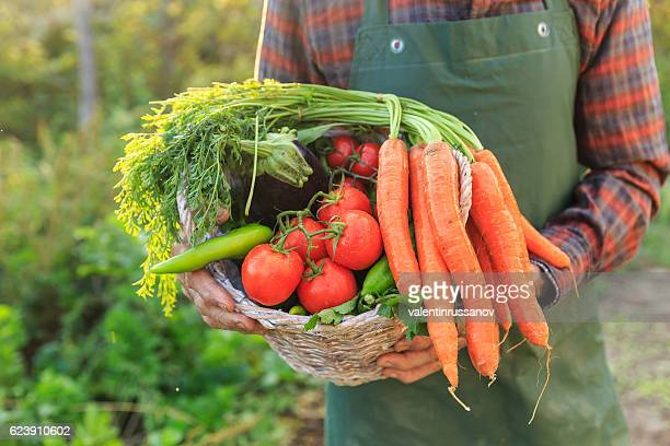 Close up of unrecognizable farmer carrying basket with vegetables