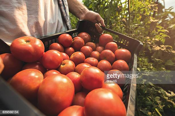 Close up of unrecognizable person holding basket of tomatoes.