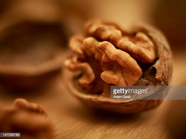 close up of walnut in shell - walnut stock pictures, royalty-free photos & images