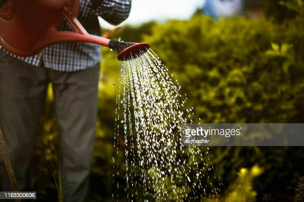 close up of watering a garden. - watering stock pictures, royalty-free photos & images