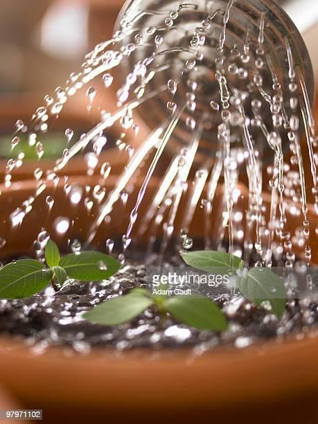 Close up of watering can watering seedlings in flowerpot