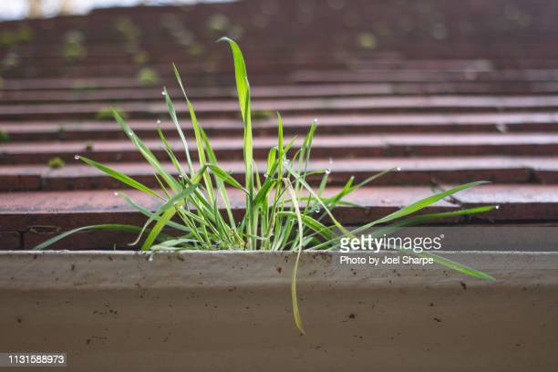 close up of weeds growing in roof gutter - roof gutter stock photos and pictures