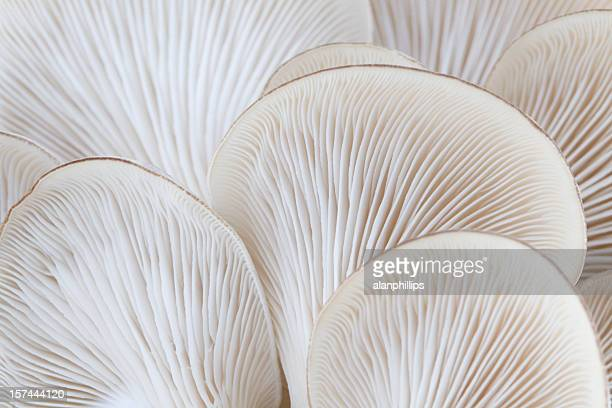 close up of white colored oyster mushroom - extreme close up stock pictures, royalty-free photos & images