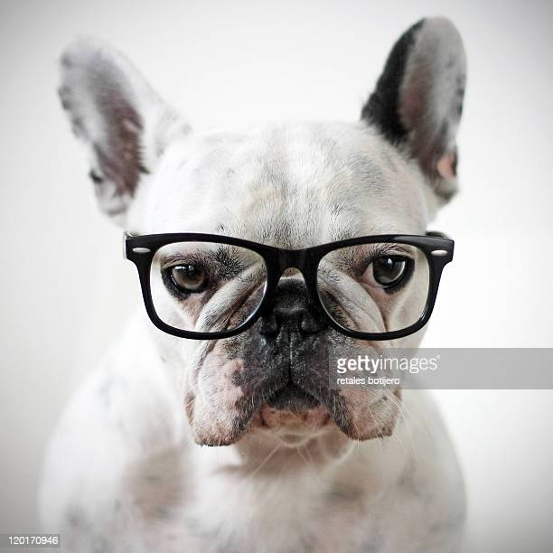 close up of white dog - black eye stock pictures, royalty-free photos & images