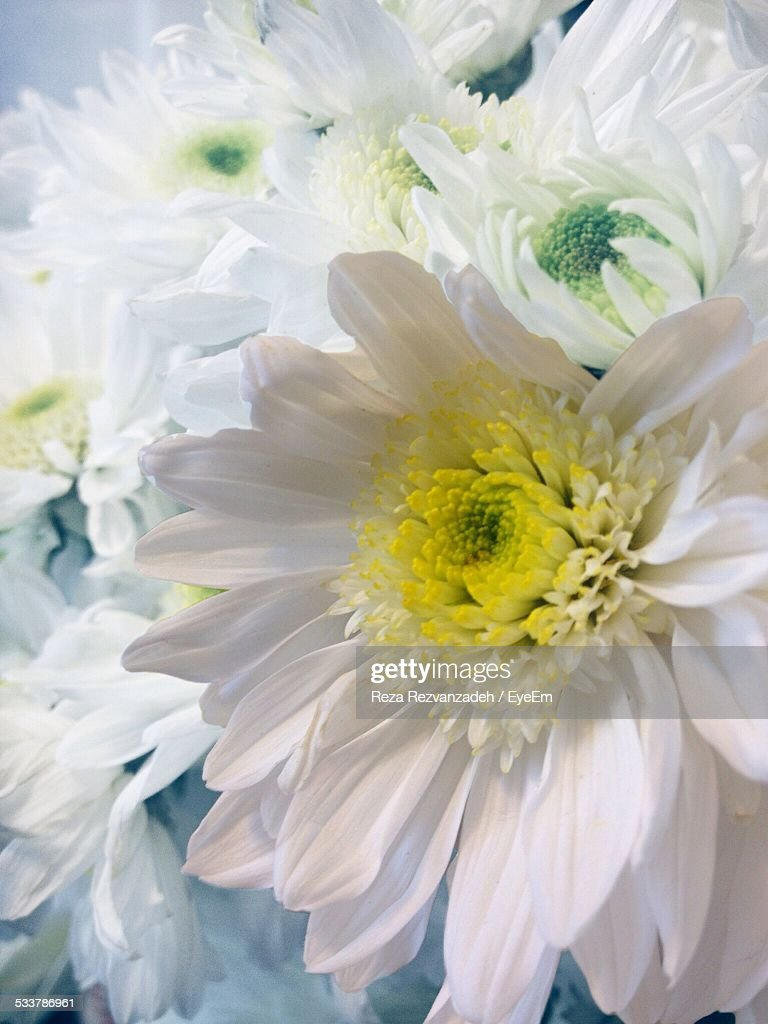 Close Up Of White Flowers : Foto stock