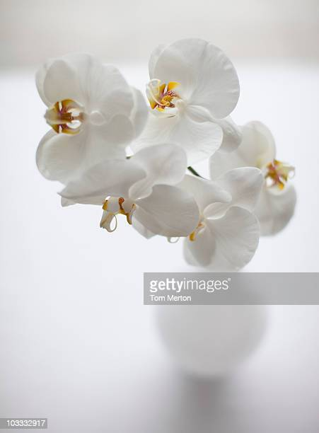 Close up of white orchids in vase