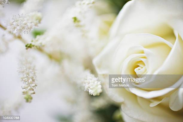 Close up of white rose and white flowers